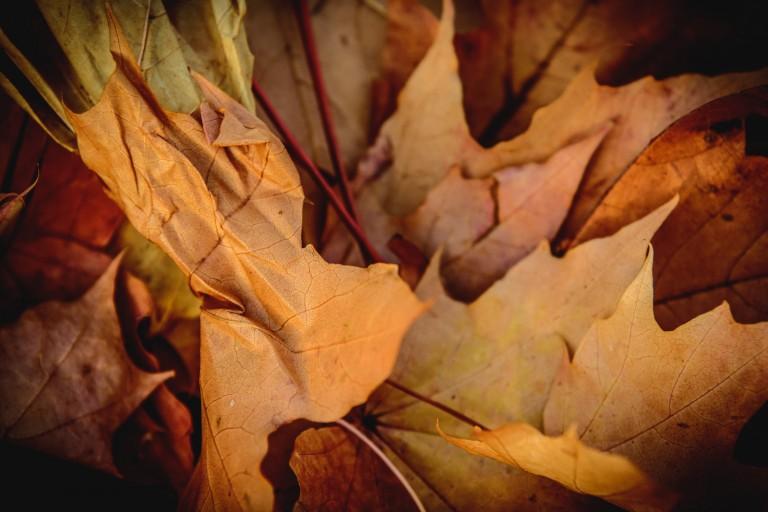 Михаил, Оксана и дети — осень